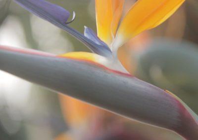Resort Flora